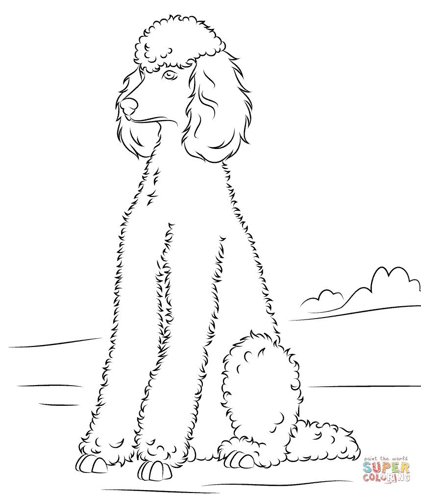 Dibujo De Caniche Para Colorear Dibujos Para Colorear Imprimir Gratis