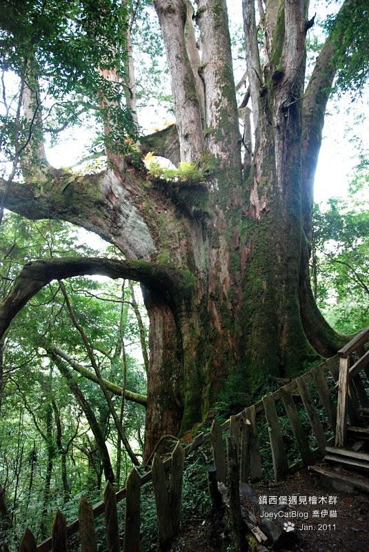 2011_0109_亞當,夏娃,國王,鎮西堡檜木群之旅DSC_0363