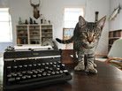 """""""Hairy Truman,"""" one of the six-toed cats at the Ernest Hemingway Home and Museum in Key West, Fla."""