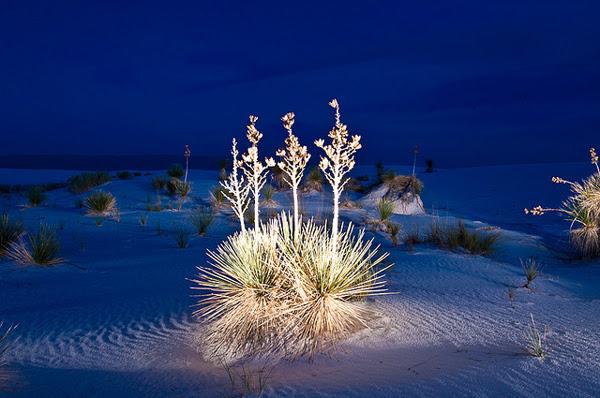 perierga.gr - Κάτασπρη έρημος στον... πλανήτη Γη!