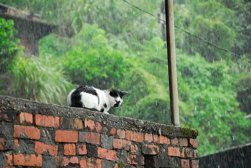 怎麼突然下大雨