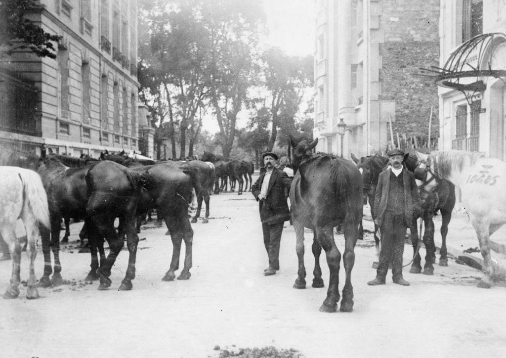 Os animais também lutaram na Primeira Guerra Mundial 34