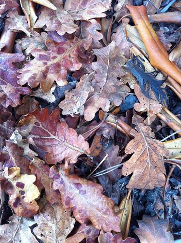 Autumn 2013 by Ayala Moriel