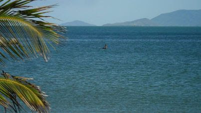 The picture that claims to be of the Loch Ness monster in waters off Magnetic Island, Townsville. (Supplied)
