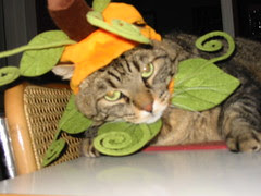 Pumpkin Joey