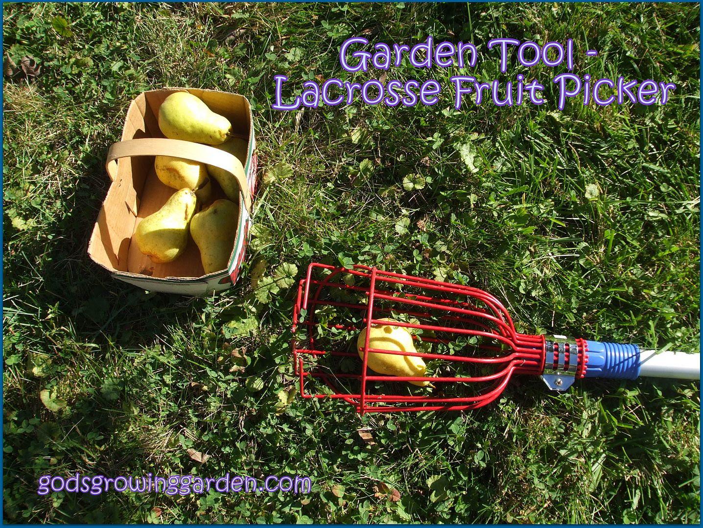 Lacrosse Fruit Picker by Angie Ouellette-Tower for godsgrowinggarden.com photo DSCF0756_zps8e645031.jpg
