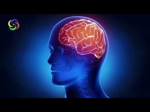 Human Brain Treatment Frequency ★ Organ - Brain ★ 7.83Hz ★ Isochronic Tone