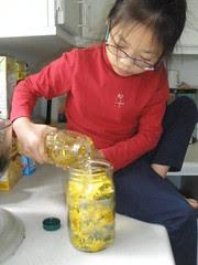 Making Dandelion Oil for Salve
