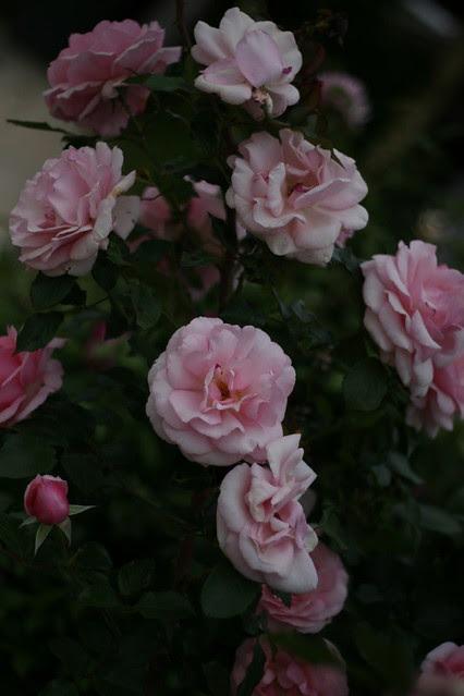 Garden Oct 2010