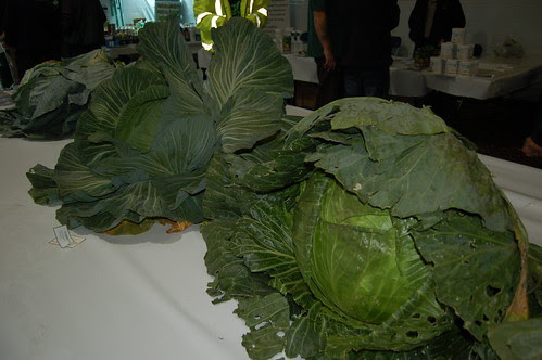 North East Horticultural Society Championship Show (6)