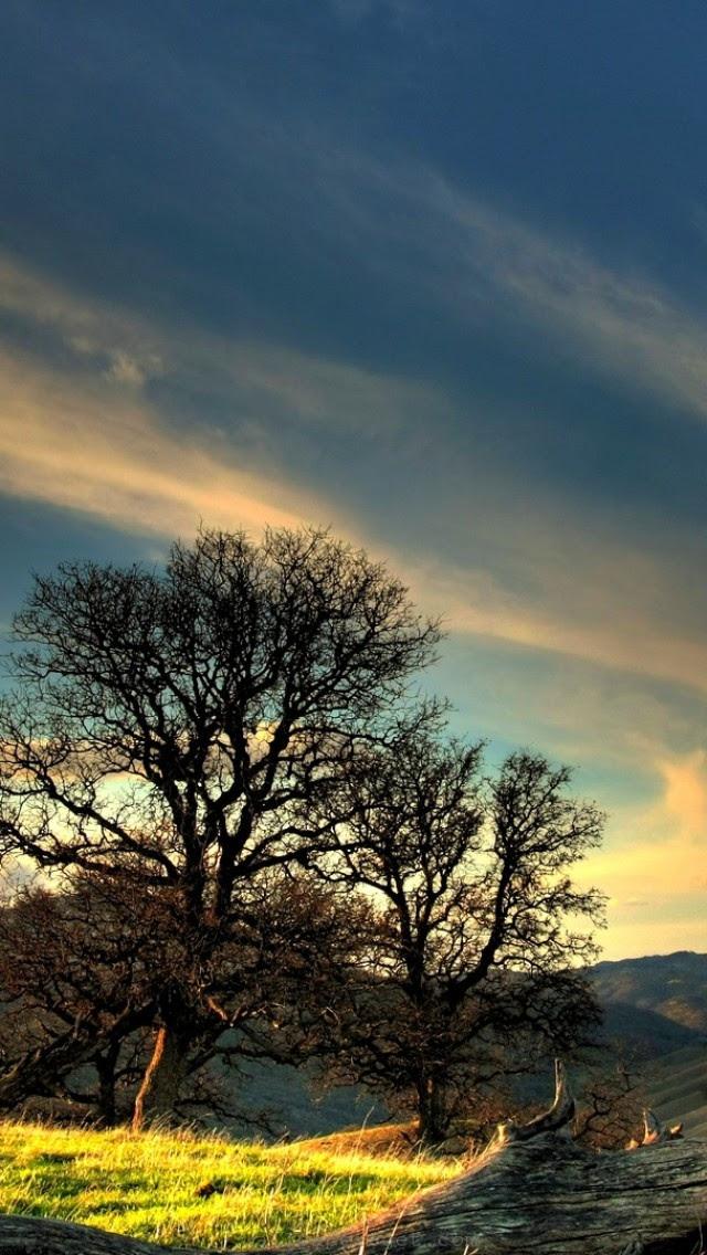 sunny-mountain-tree-nature