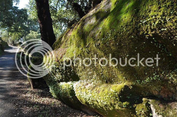 photo caminhos_zps5351af38.jpg