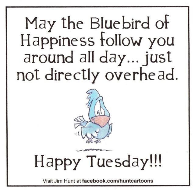 Image result for tuesday humorous quotes