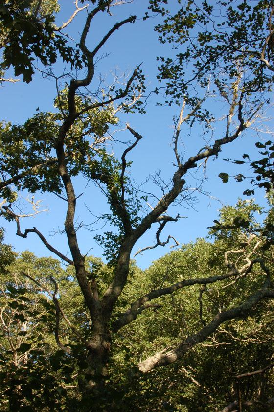 tree-against-sky-copy.jpg