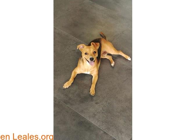 Perros en adopción » España » Las Palmas - Gran Canaria » Yakky en adopción