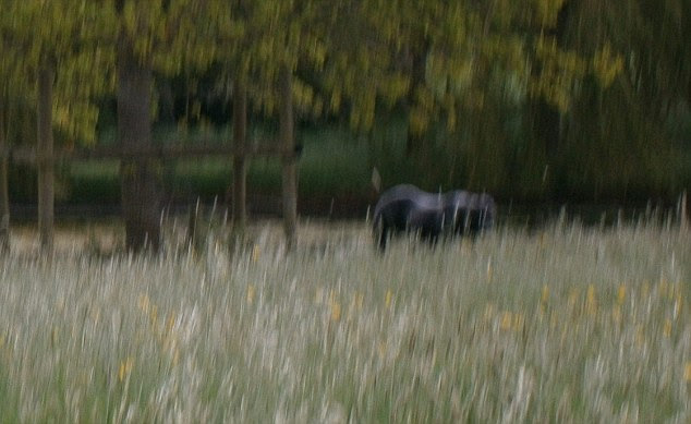 What appears to be a big cat in a picture taken by Sir Benjamin Slade in the grounds of Maunsel House, Somerset