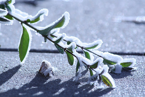 morning frost - 4