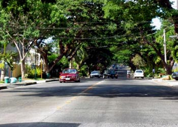 Acacia Avenue, just outside our house