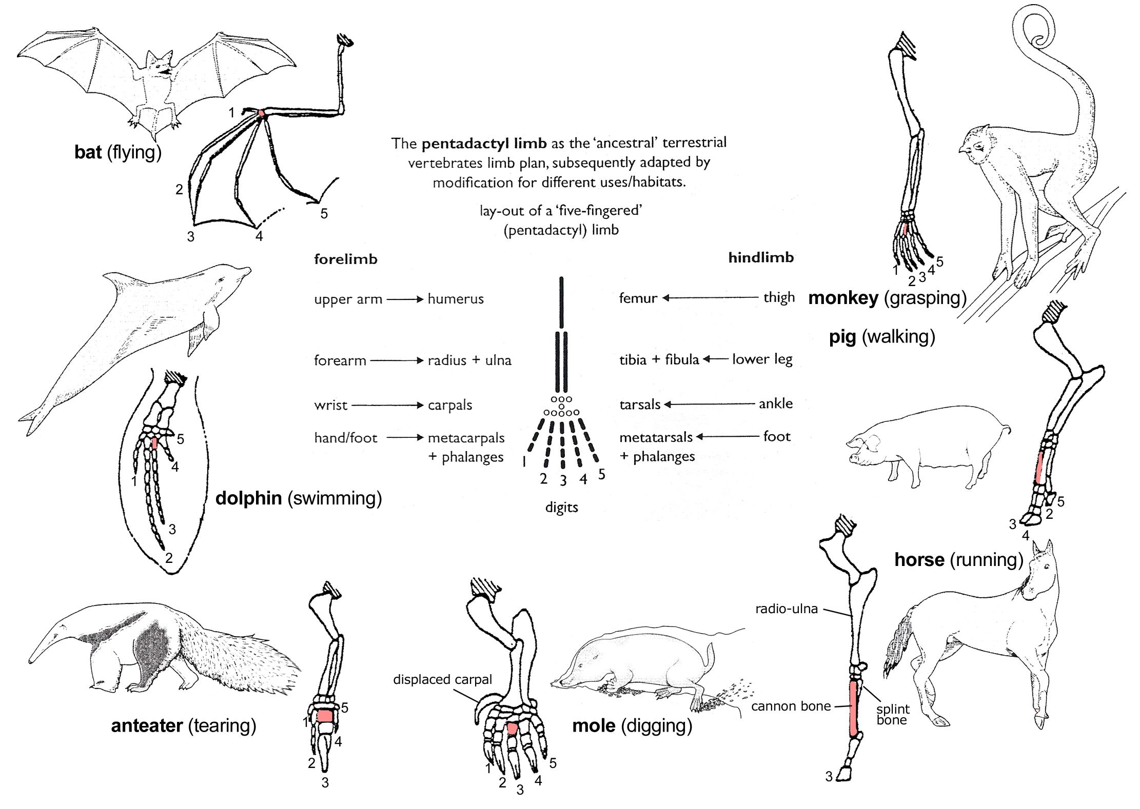 worksheet. Comparative Anatomy Worksheet. Carlos Lomas Worksheet For ...