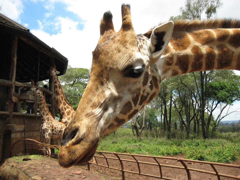 Giraffe Manor IMG_0182