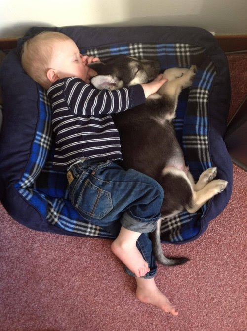 cute-overload:    My son and his puppy, friends for life.