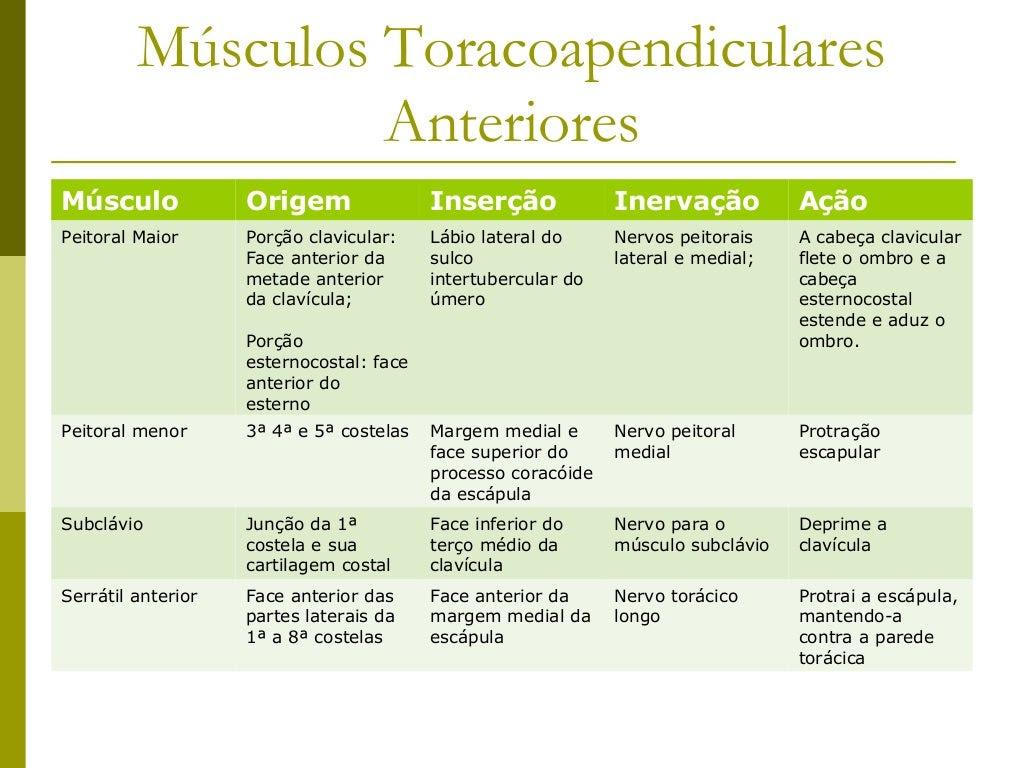 Músculos do Braço