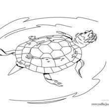 Dibujos Para Colorear Tortuga Caguama Eshellokidscom