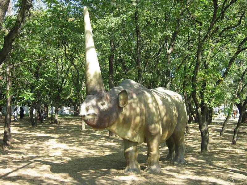 Este es el animal que probablemente dio origen al mito del unicornio
