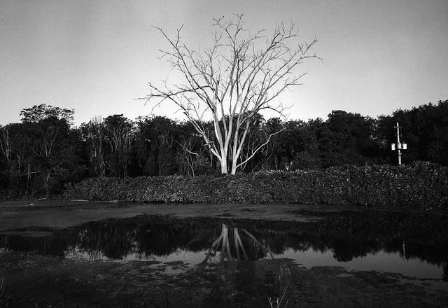 Morning Tree in B&W