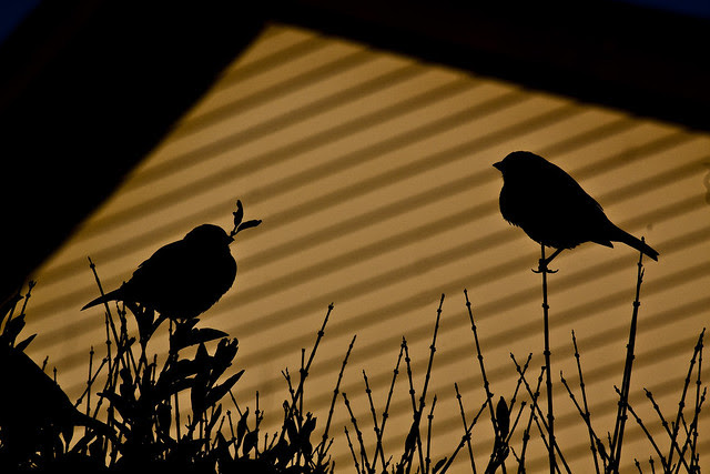twosparrowsilhouette