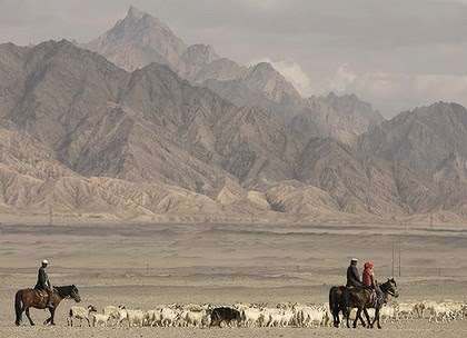 Tibetan nomads herd their sheep on the outskirts of Golmud in China's northwest Qinhai province.