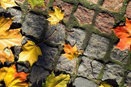 Autumn leaves sur la passerelle photo