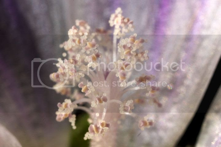 photo _polen_zpsr3hggko7.jpg