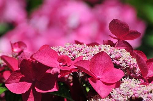 Stunning Colors Of Nature - IMRAN™ by ImranAnwar