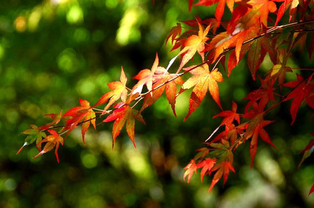 2006.10.21 福壽山農場(PS)