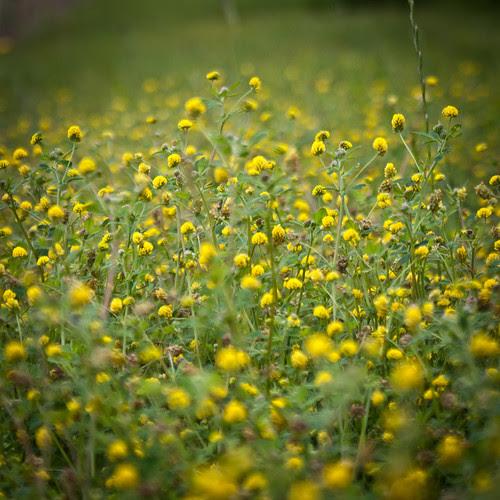 printemps dans la prairie