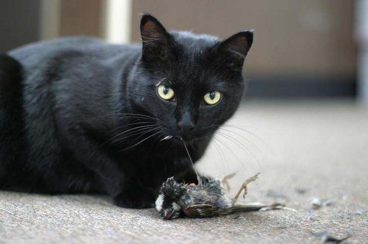 Cats eat birds