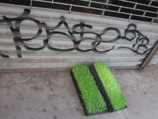 new york street arts