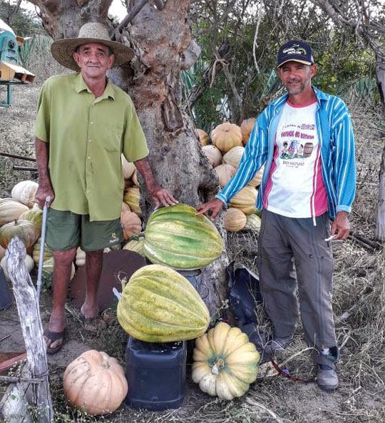 O agricultor Jorge Grande exibe junto com o primo Zé Hamilton as abóboras gigantes colhidas na sua propriedade | Foto: Arquivo Pessoal