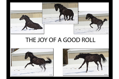 The Joy of Rolling