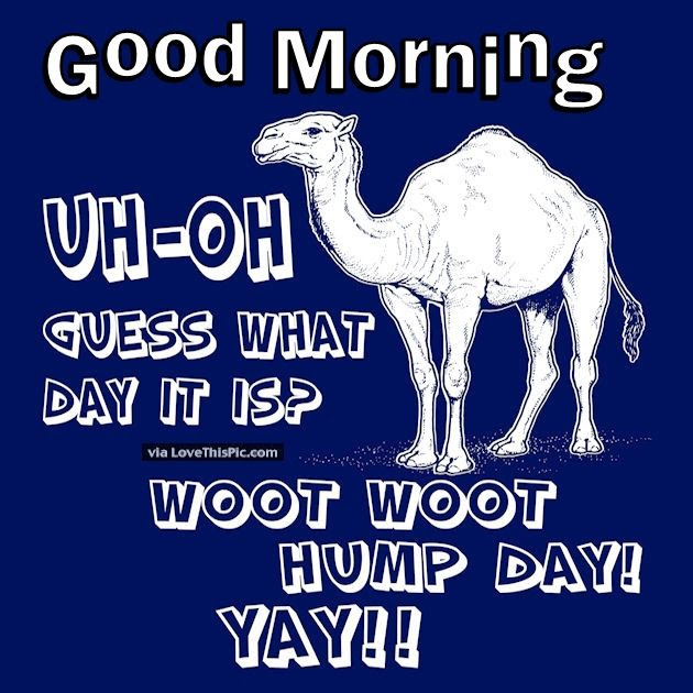 Good Morning Uh Oh Guess What Day It Is Hump Day Pictures Photos