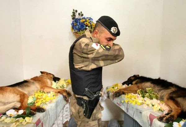 A soldier mourns for two dogs lost in combat.