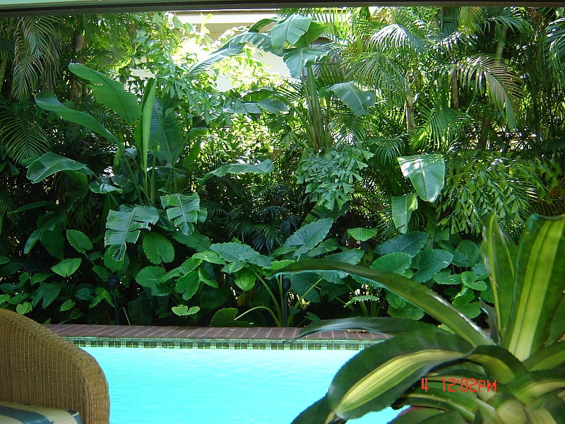 Tropical Landscaping around Pool