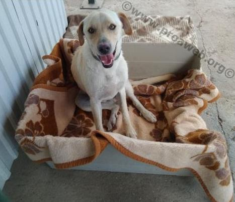 ¿Necesitamos en España inspectores de bienestar animal como en Australia?
