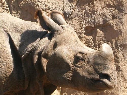 EXTREME closeup: Rhino!