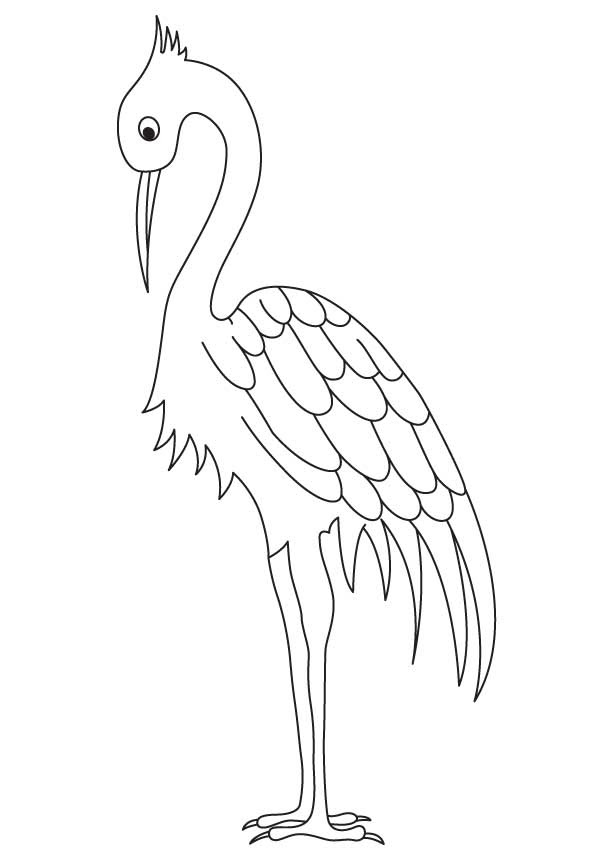750 Top Heron Bird Coloring Pages  Images