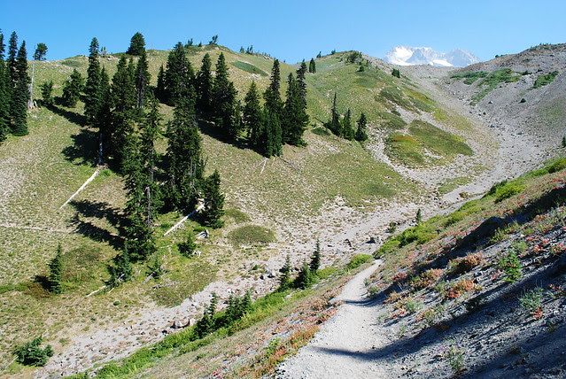 Along the Timberline Trail / PCT headed to Paradise Park
