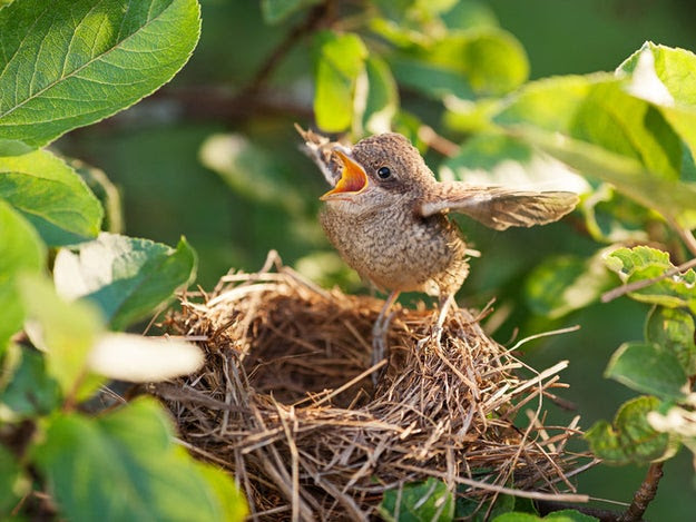 We all have a general understanding of what baby birds look like, right?