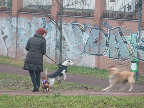 Tre cani e una donna by Ylbert Durishti