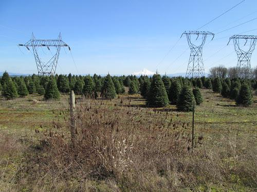 Mt Hood, framed by powerlines